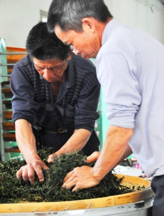 Так мнут светлый улун - Тегуаньинь. Это фото я сделал на чайной мануфактуре прошлой весной. До сих пор на некоторых мануфактурах в Китае Тегуаньинь обрабатывается вручную. Без использования инструмента.