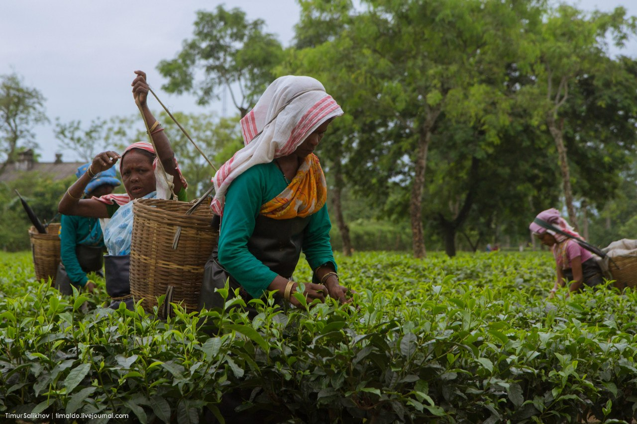 hot coffee market in india to Coffee production in india is dominated in the hill tracts of south indian states, with karnataka accounting for 71%, followed by kerala with 21% and tamil nadu (5% of overall production with 8,200 tonnes.