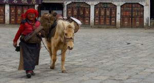 Tibetan Woman and Pony