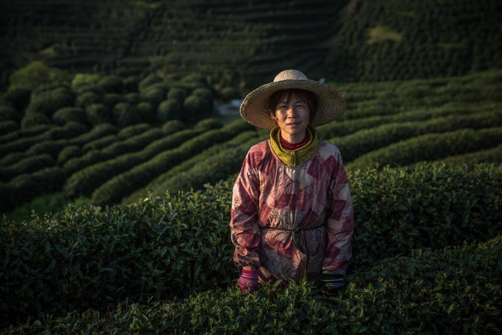 worlds primary tea producer - HD1200×800